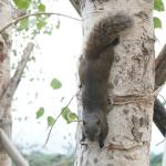 羅東運動公園內處處可見活潑好動的松鼠
