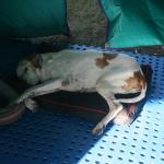sleeping monty