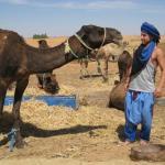 Morocco Arukikata - Day Tours