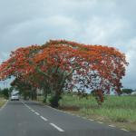 Mauritius - Sulla strada