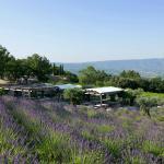 Jardin dans les vignes