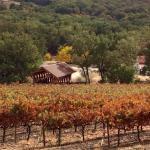 101 Wine Tours