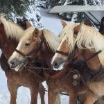 Pferdeschlitten zur Alm