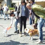 Многие римляне гуляют по улицам с собаками