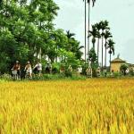 Photo of Kim Bong Carpentry Village