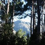 A glimpse of the mountains between the trees