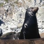 Sea Lions, Cabo Pulmo