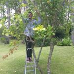 El hijo de los dueños arrancando limones para hacer nuestras caipiroskas!!