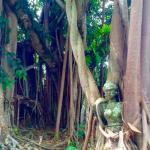 nature and sculpture living harmoniously