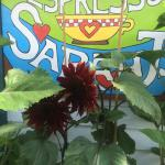 Sarah J's Cafe