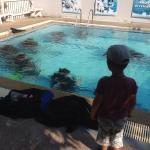 La piscine de plongee