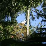 Kakadu im Garten