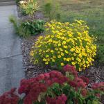 Entry border garden