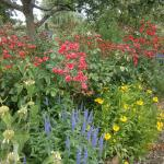 Pretty flowers in the garden at Gunby House