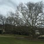 Doblhoff Park