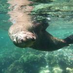 Daytrip to the Espiritu Santu island, snorkeling with friendly sealions