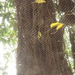 Overhead Net