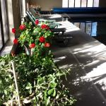 Plants in the pool room