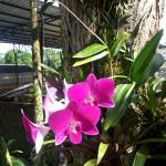 Flor no estacionamento