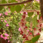 Photo de Minh Anh Garden Hotel