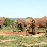 Amazing Addo, go for a trip with Dungbeetle Tours