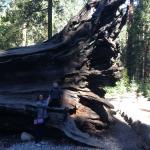Yosemite Sierra Inn Oakhurst Foto