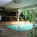 Foliage surrounding the pool