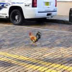 Photo de Ybor City Historic Walking Tours