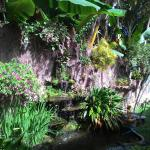 Fish pond with 2 frogs that sing a little and banana trees!