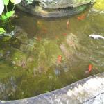 The fish ;)