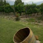 Vista de las viñas