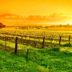 Dawn of a new day in the Barossa Valley