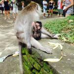 Ketut Bali Tour - Day Tour