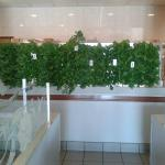 Our new hydroponic garden from Uriah farms!