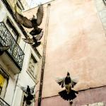Lissabon - Tauben in der Altstadt
