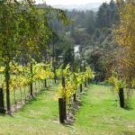 Vineyard and river views