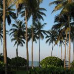 Photo de Palm Village Hotel