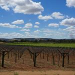 Foto de Perth Vineyards Holiday Park - Swan Valley