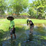 Reis selbst anpflanzen