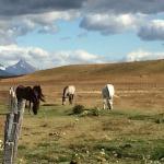 Horses at Bories