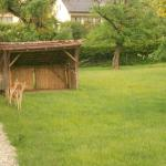Deer on the grounds