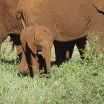 Elefantensichtung