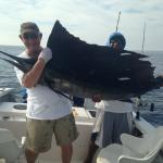 Sailfish caught with Capt. Luis