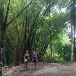 Bamboo trees providing shade along a walk to the beach.