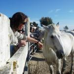 Visiting Horse Ranch while on the Le Petit Train