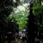 頼朝が鎌倉を見下ろしている…そんな気持ちになろうと、背後から撮ってみました。この景色が、好きだったんだろうなぁと。