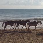 Photo de Cabarete Palm Beach Condos