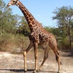 On the Safari tour (unmissable)