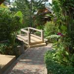 tropical jardin