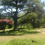 Foto de Casa Coqui en Hacienda la Borinquena